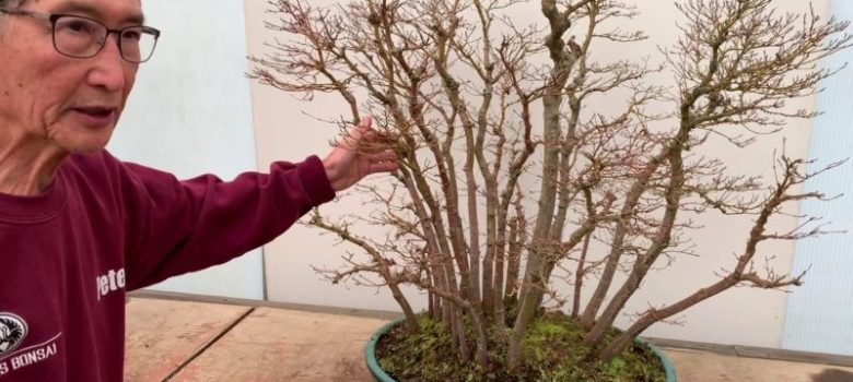 Bonsai Forests and Groups