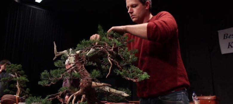 Juniper bonsai demo by Ryan Neil
