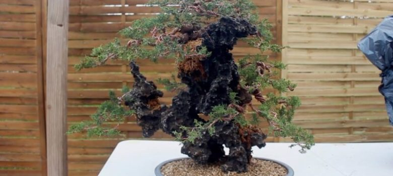 Creating a Rock Bonsai