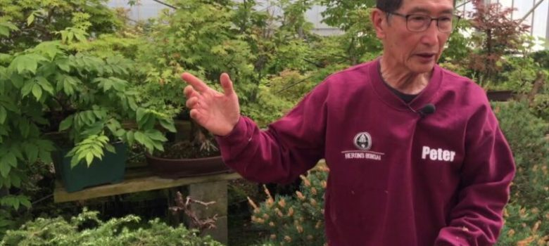 What Species can be Air Layered for Bonsai Explained
