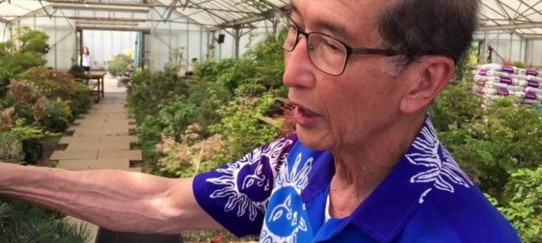 How to shape a White Pine Bonsai