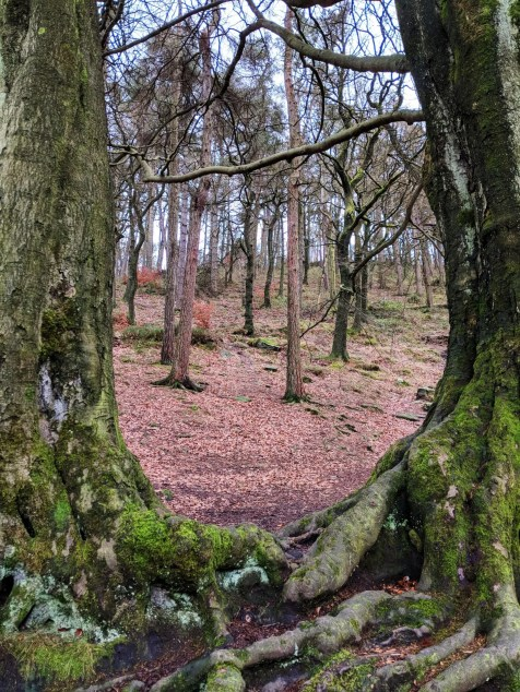 Looking through two trees at the base of Back Forest on the way to Lud's Church