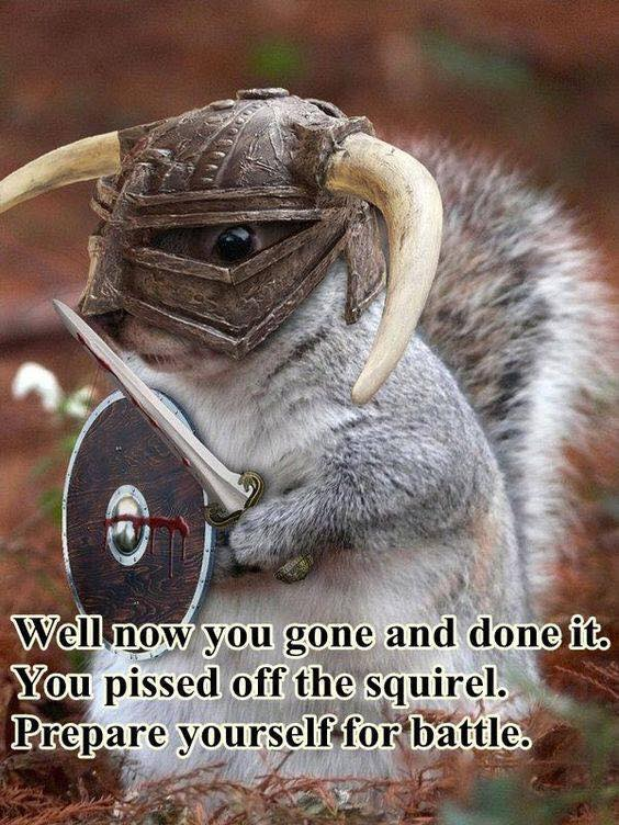 Image may contain: text that says 'Well now you gone and done it. You pissed off the squirel. Prepare yourself for battle.'