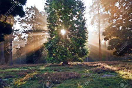 11178952-Motivational-sunbeams-through-trees-in-Autumn-Fall-forest-at-sunrise-Stock-Photo