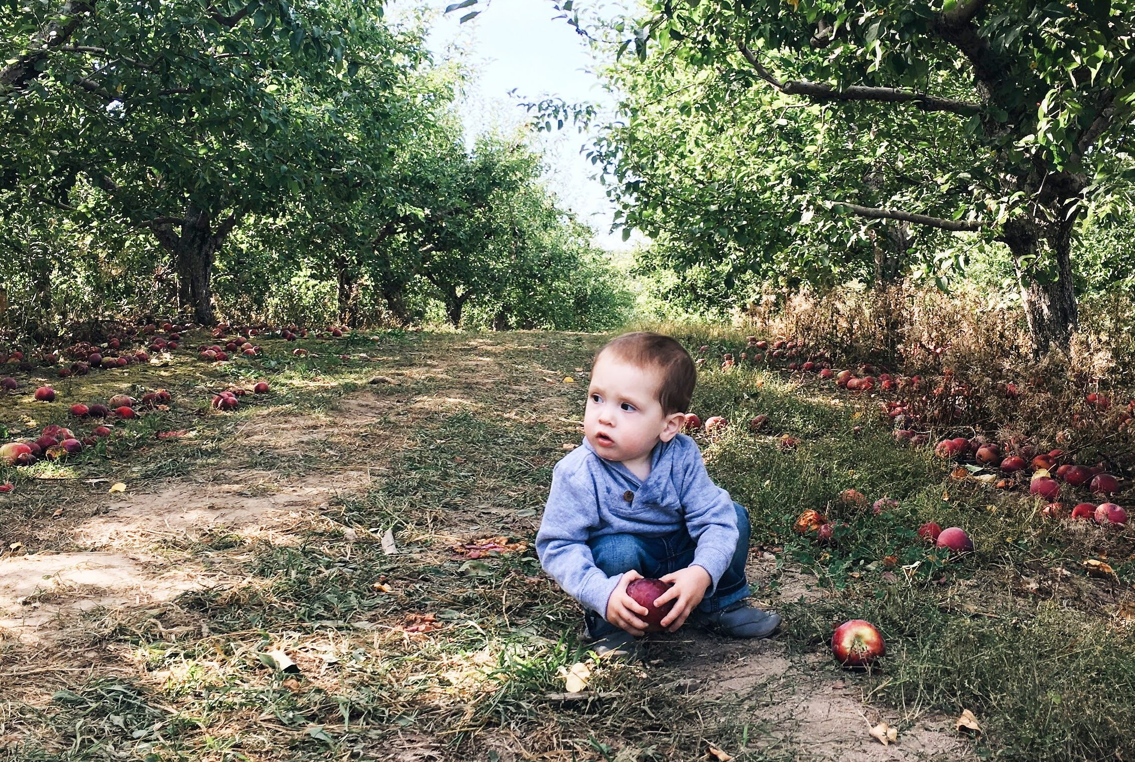 Apple Picking in Maine