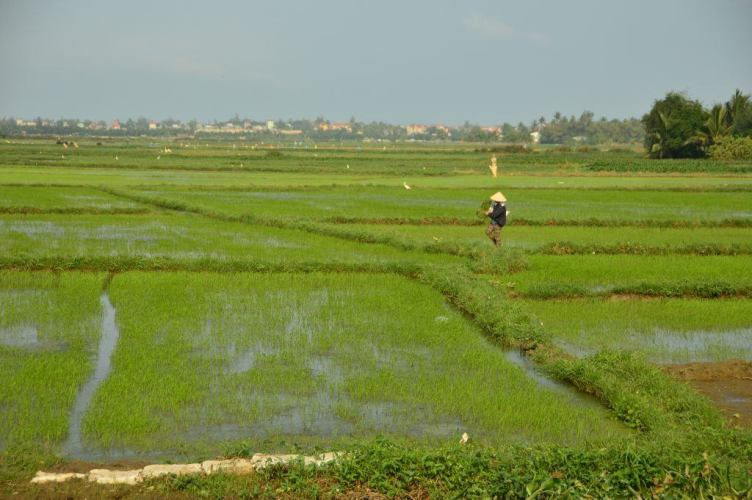 what to do in hoi an in 3 days