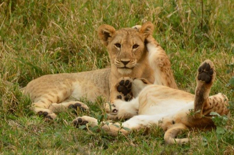 camera for safari