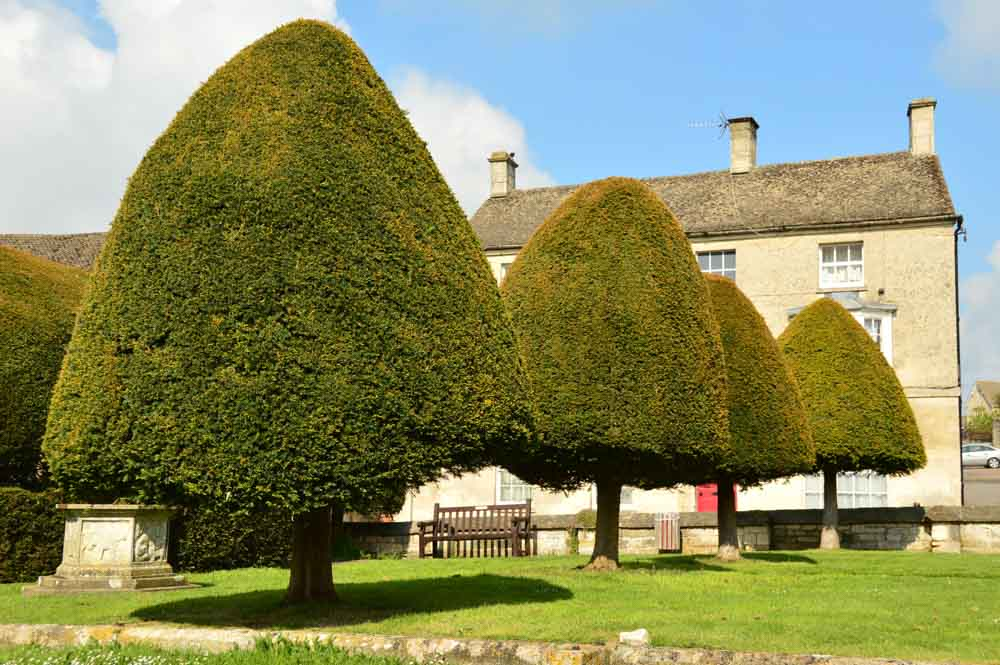 england_cotswolds_painswick-yew-trees