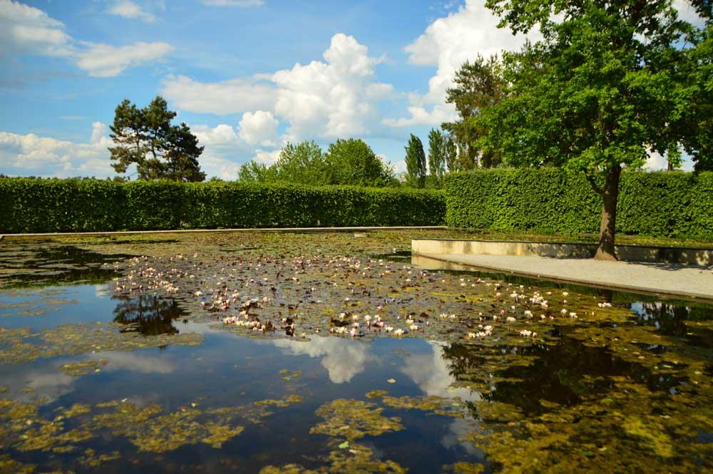 austria_graz_austrian-sculpture-park-lake-with-lillies