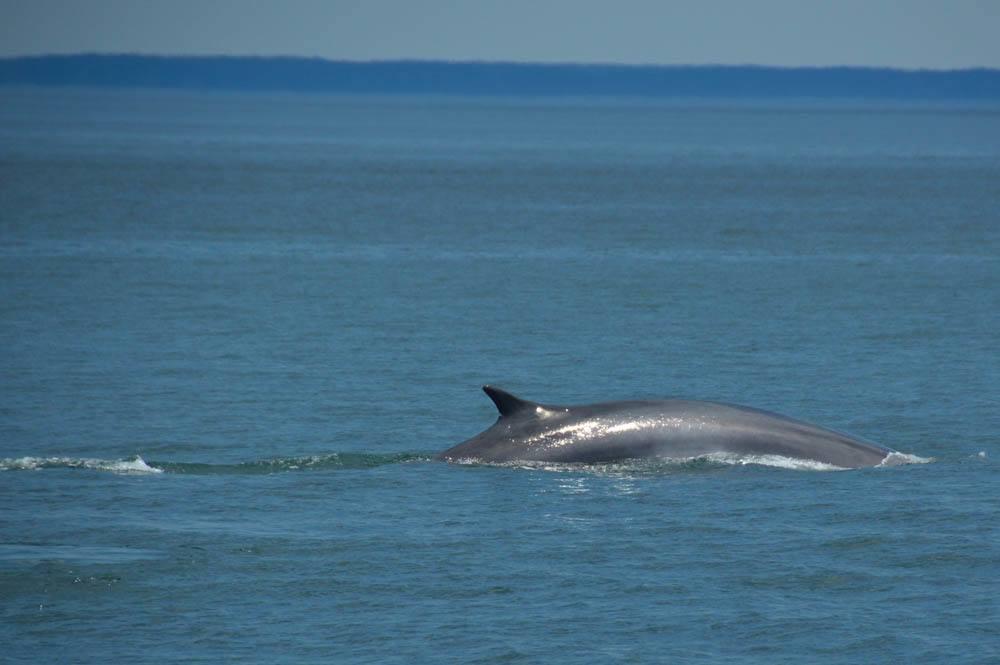 canada_new-brunswick_standrews-whale-watchin