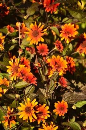 england_romsey_harold-hillier-gardens-orange-flowers