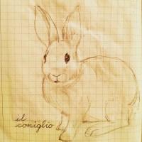 229. Rabbit
