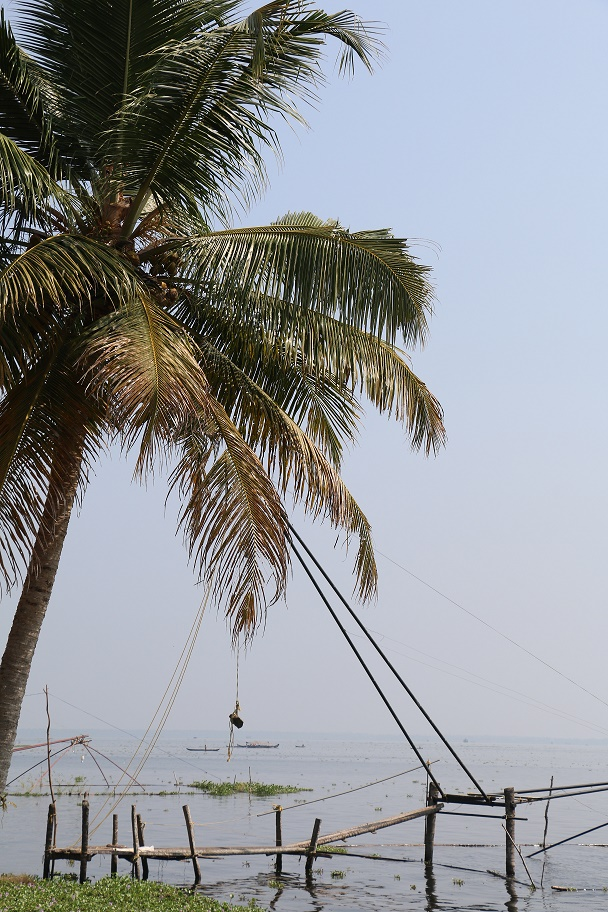 Backwaters_LemonTree_6