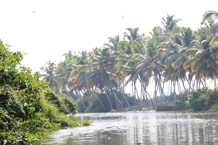 Kovalam_Backwaters_3
