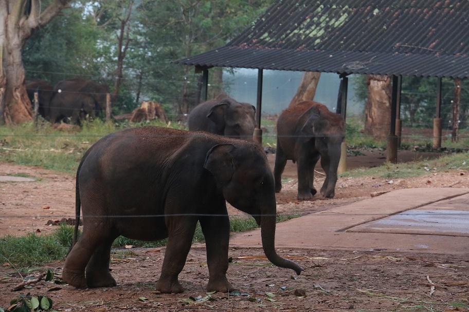 Udawalawe_ElephantTransitHome_3