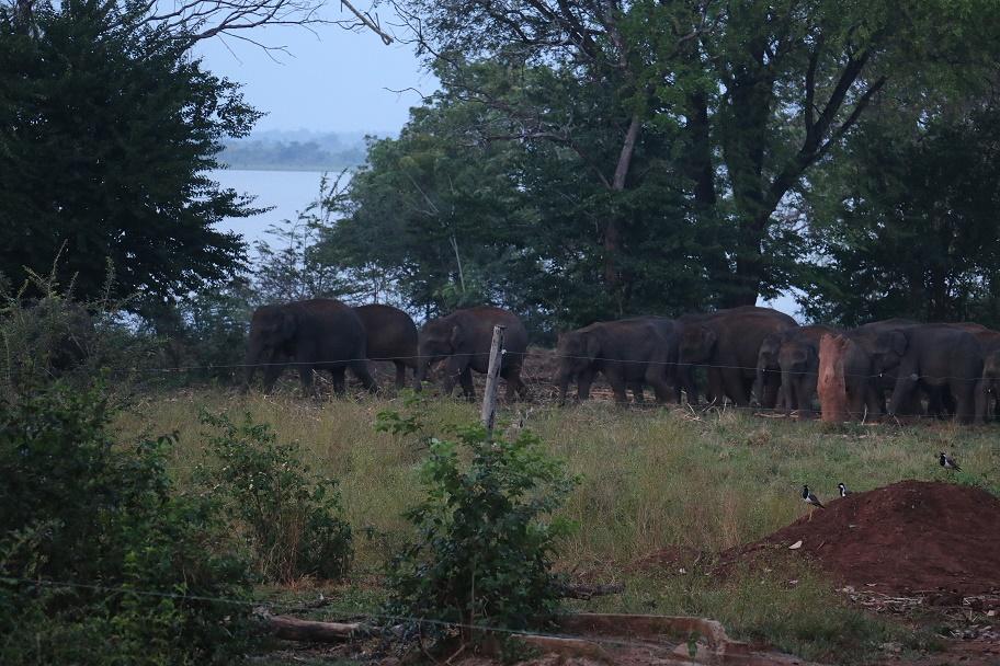 Udawalawe_ElephantTransitHome_5