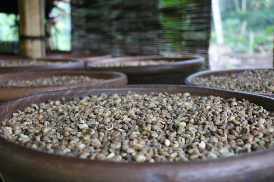 Bali_Coffee_Plantation_thebraidedgirl