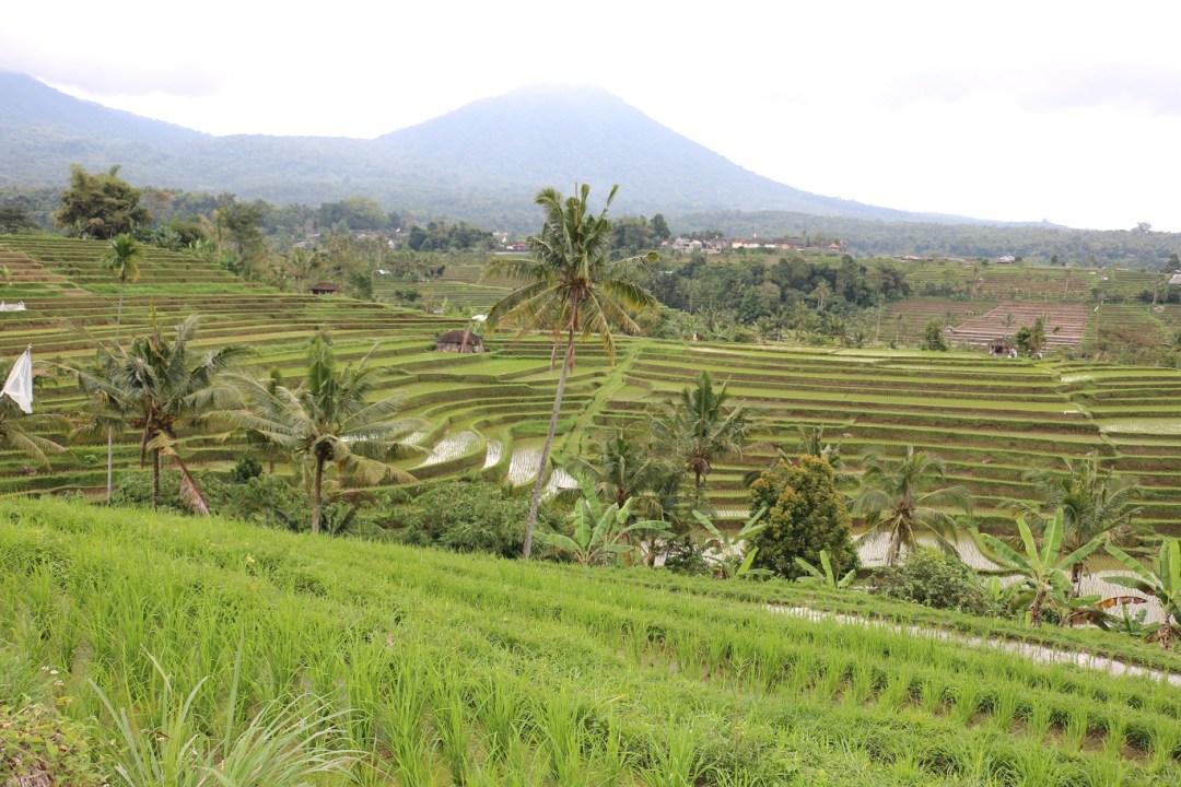 Jatiluwih-Reisterrassen-Bali-thebraidedgirl-10
