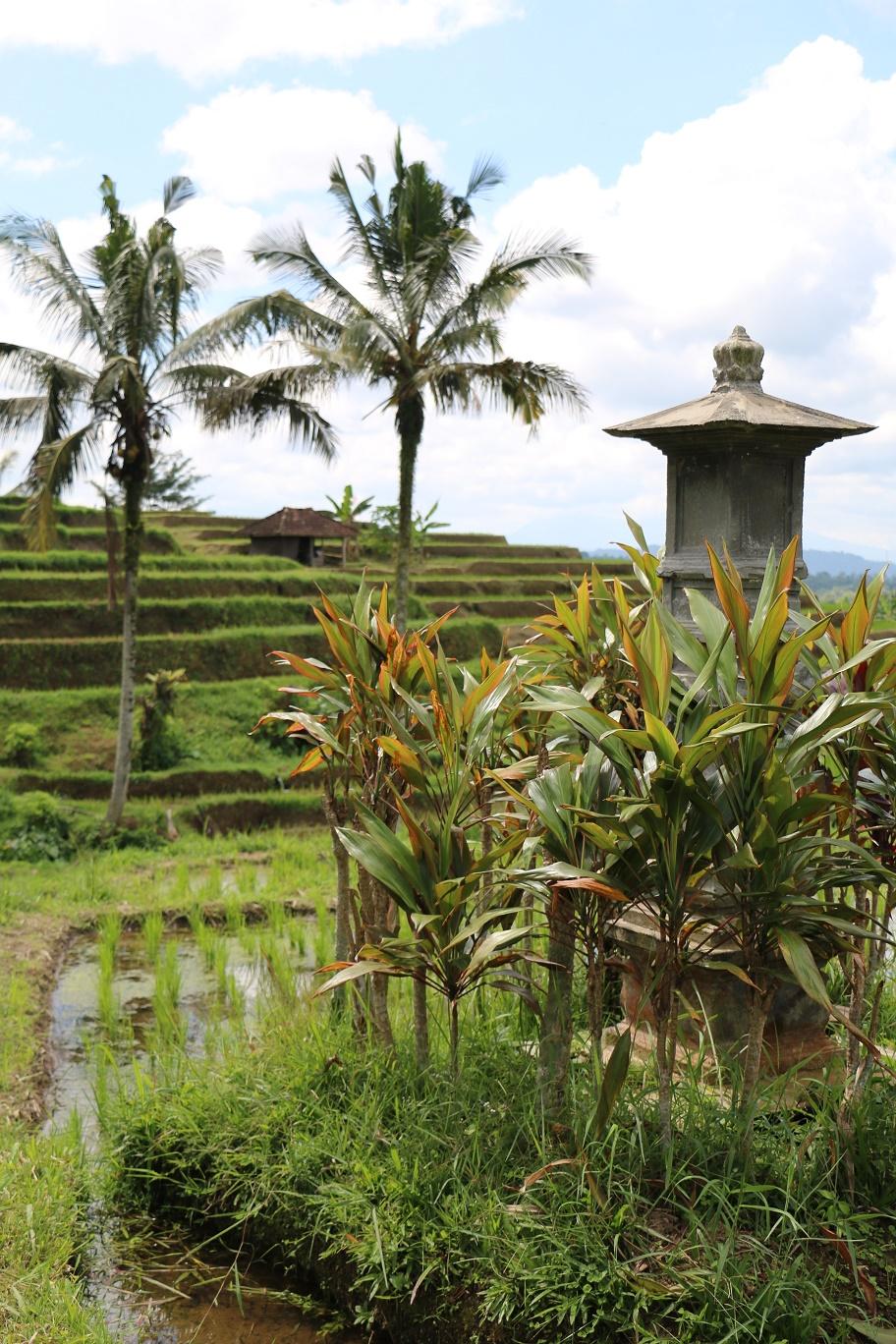 Jatiluwih-Reisterrassen-Bali-thebraidedgirl-2