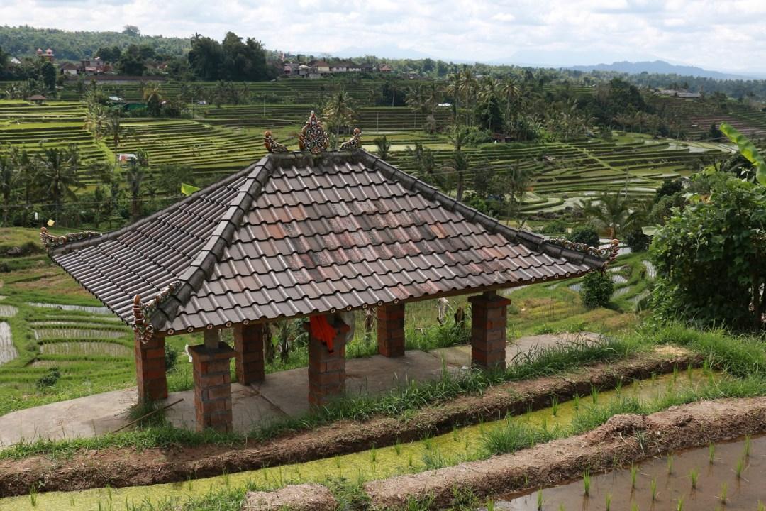 Jatiluwih-Reisterrassen-Bali-thebraidedgirl-6