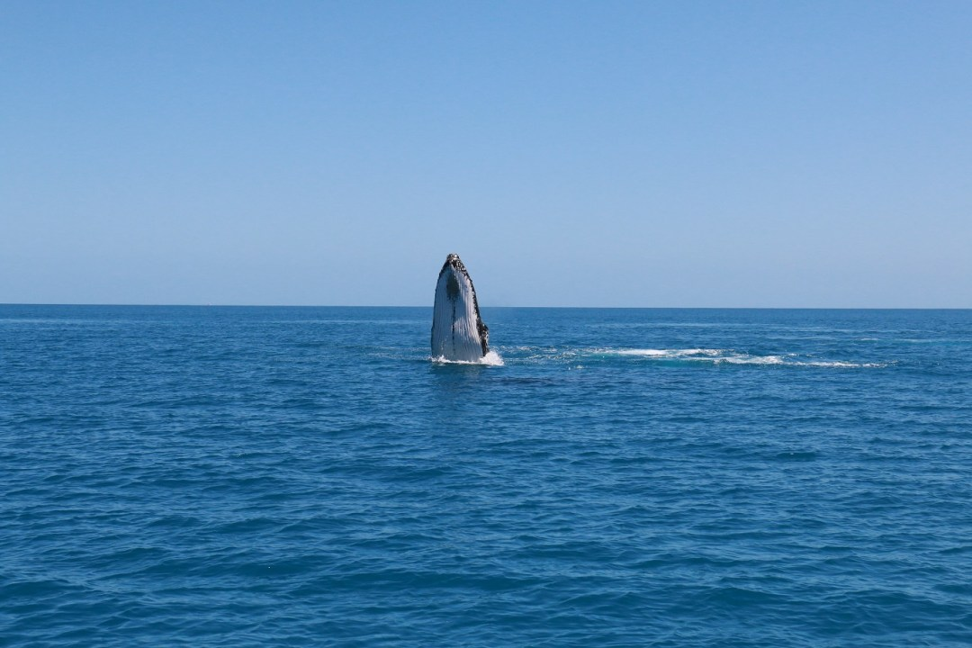 whale-watching-hervey-bay-10-thebraidedgirl