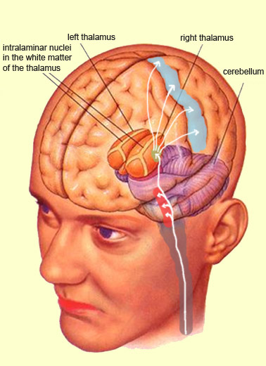 reticular formation diagram mig welder wiring the brain from top to bottom