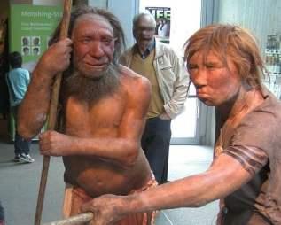 800px-Neandertala_homo,_modelo_en_Neand-muzeo