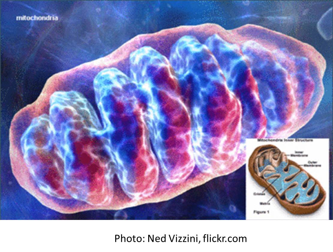 Preventing mitochondrial disease: Can three (parents) be the magic ...