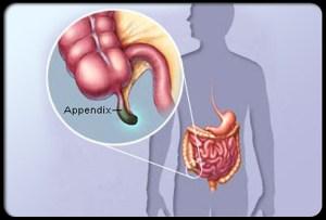 Appendix 1