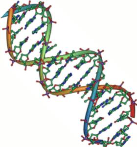 DNA_double_helix_45