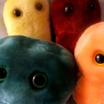 Cuddly microbes: Note - significantly cuddlier than those found in your gut!
