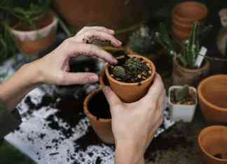 start a gardening business online
