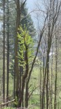 Enthusiastic Tree