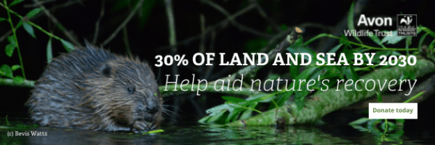 """Avon Wildlife Trust's banner, showing a wild beaver in the river Avon, with the following text:   """"30% of land and sea by 2030: help aid nature's recovery - donate today.""""  Ian writes today for World Habitat Day."""