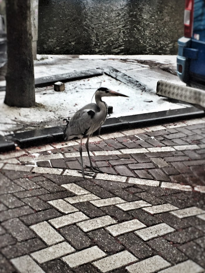 bird; Dutch bird; Amsterdam; Holland; Netherlands; Europe; travel; family travel;