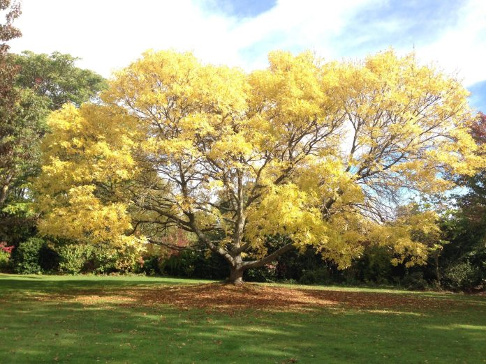 yellowishtree-lincoln-newzealand-thebroadlife-travel-story