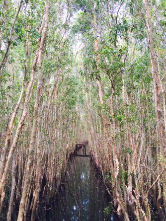 The Melaleuca trees in Tan Lap floating village, Long An