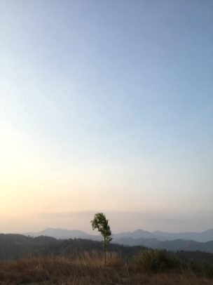 Alone tree.