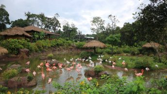 Flamingo founded in Vinpearl Safari, Phu Quoc Island, Vietnam