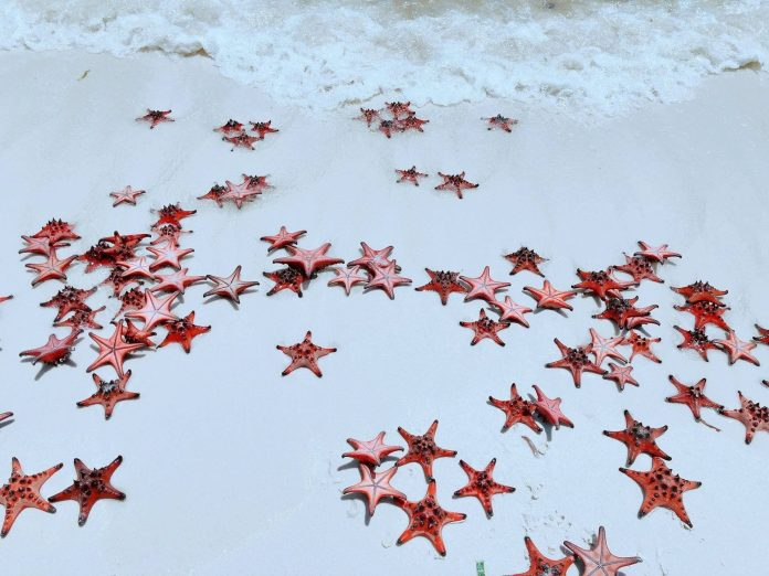 Red Stars at Rach Vem Beach, Phu Quoc Island, Vietnam