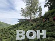 at BOH Sungai Palas Tea Centre