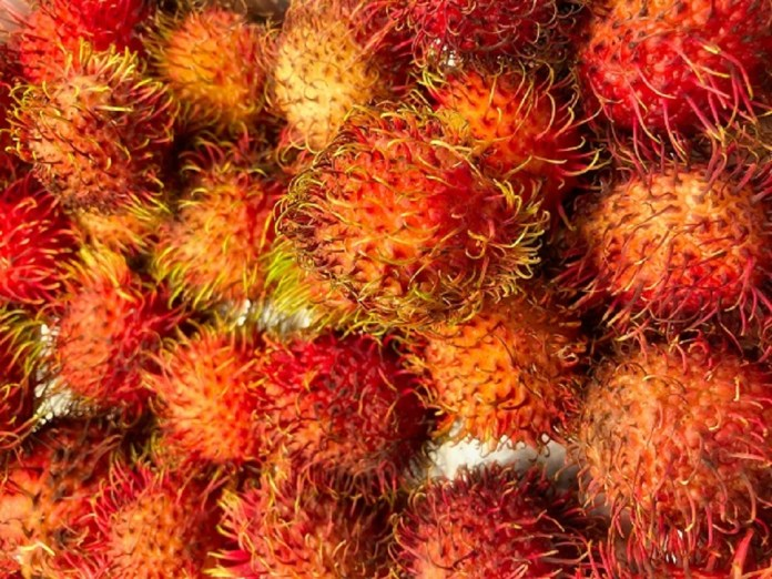 exotic vietnam fruits rambutan