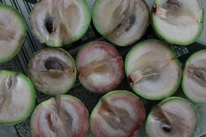 star apple fruit for sale