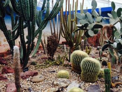 cactus-hagleypark-thebroadlife-travel-wander-newzealand