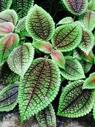 green-leaves-thebroadlife-travel-wander-hagleypark-newzealand
