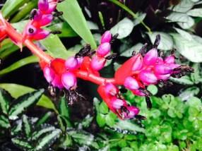 pink-black-flower-thebroadlife-travel-wander-hagleypark-newzealand