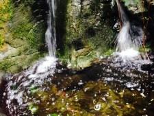 streams-hagleypark-thebroadlife-travel-wanderring-newzealand
