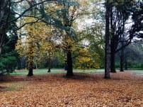 trees-hagleypark-newzealand-thebroadlife-travel-wanderlust