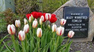 Beav Garden 2