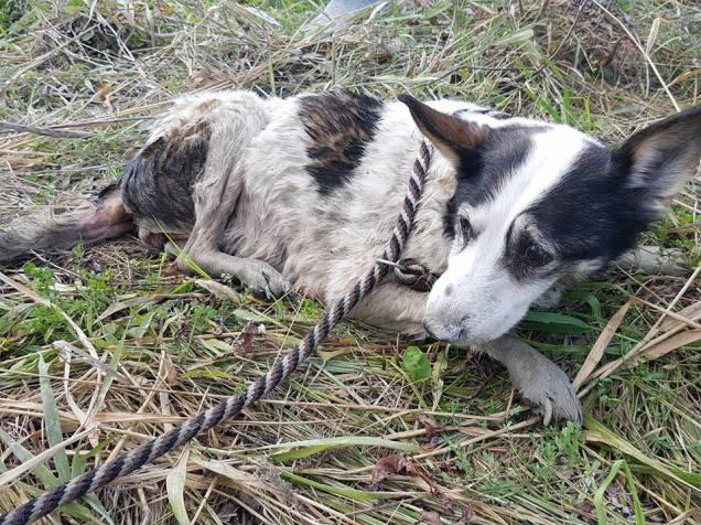 abandoned dog 2